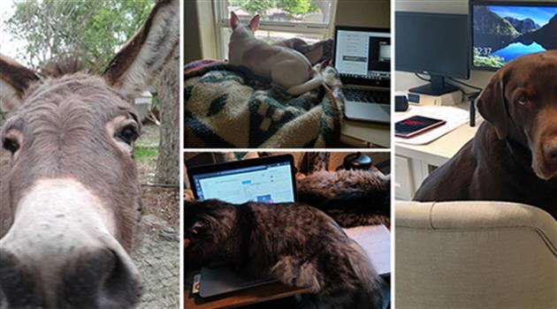 Co-Working ... with Pets!