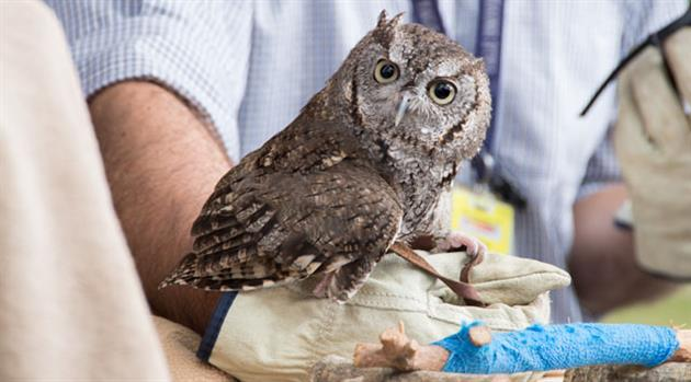 Johnson Space Center does give a hoot—about wildlife