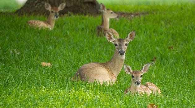 Of deer and fawns: A cautionary tale