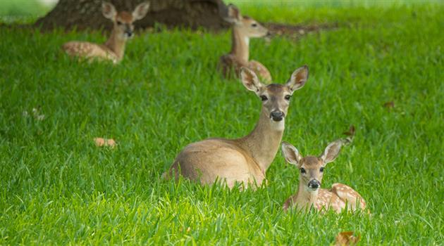"A topic near and ""deer""—sustainability"